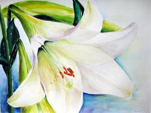Weiße Lilie, Aquarell (65x76cm)