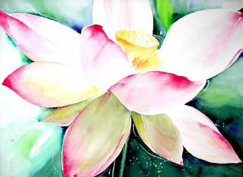 Lotusblüte, Aquarell (56x76cm)