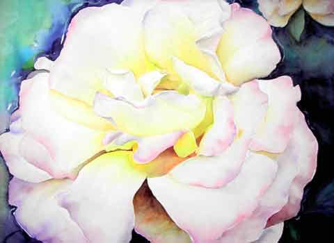 Weiße Rose, Aquarell (56x76cm)